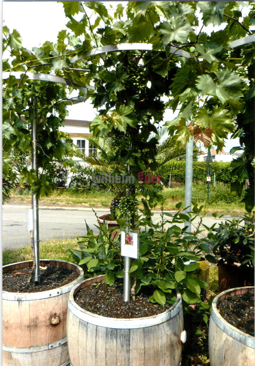 Fassstolz pflanzen deko fassm bel garten f sser shop for Pflanzen deko garten